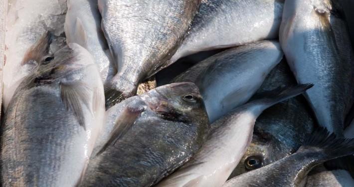 frische Fische im Restaurant Mykonos am Faakersee